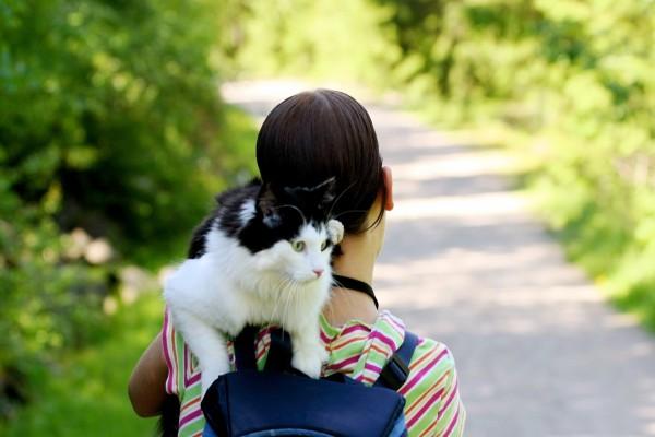 Un hermoso gato sobre el hombro de una amiga