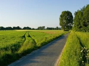 Postal: Carretera estrecha en un campo verde