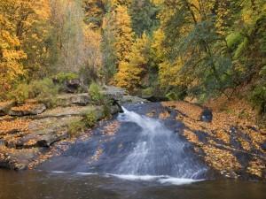 Postal: Hojas otoñales junto al cauce de un río