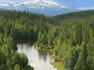 Postal: Río entre árboles verdes