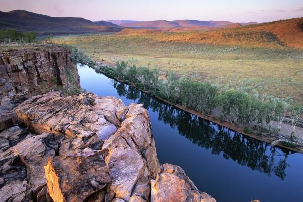 Árboles en la rivera de un río