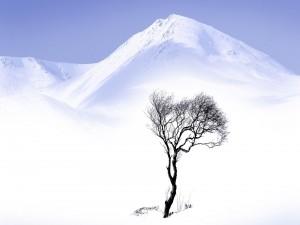 Árbol solitario bajo las montañas blancas