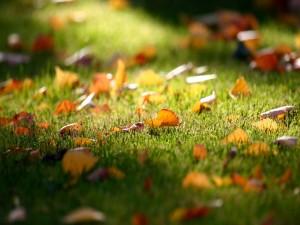 Postal: Hojas otoñales sobre la hierba