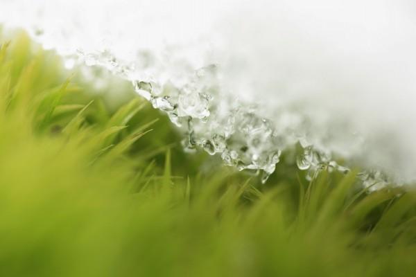 Hielo sobre la hierba