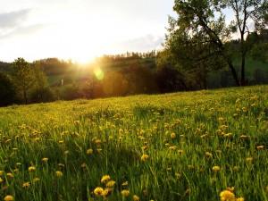 Postal: Sol iluminando un campo de flores