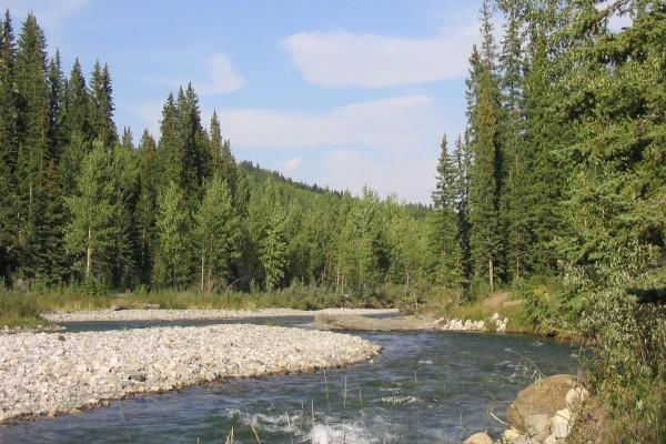 Piedras en la orilla de un río