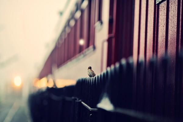Pájaro posado en una valla negra