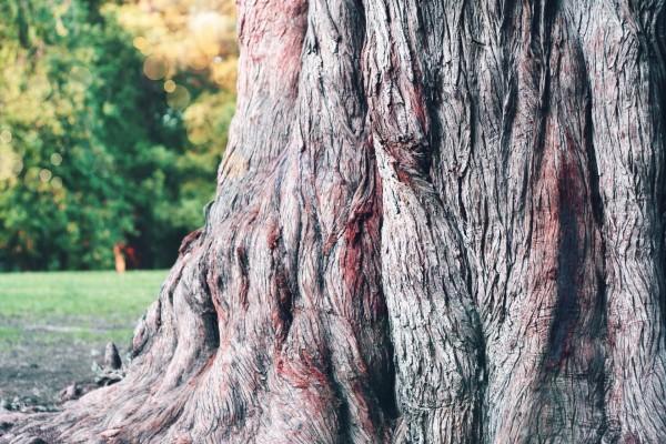 Grueso tronco de un árbol