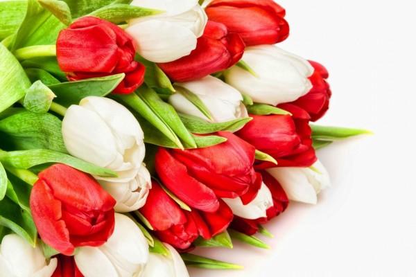 Ramo de tulipanes rojos y blancos