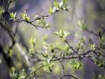 Brotes verdes en las ramas de un árbol