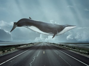 Postal: Ballena nadando sobre una carretera
