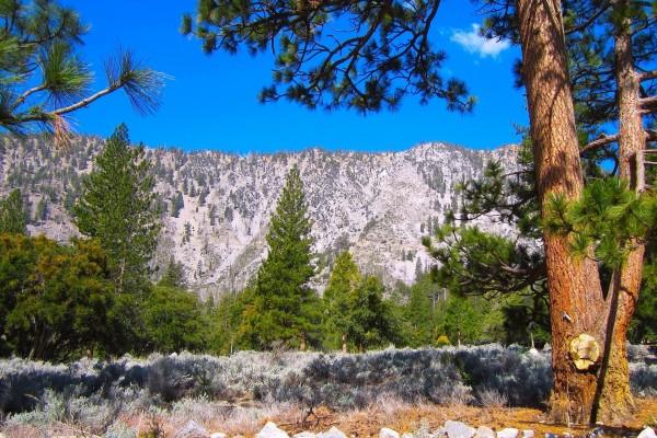 Cielo azul sobre las montañas y el bosque