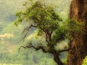 Árbol creciendo en una pared de roca