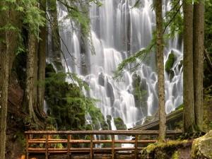 Postal: Puente de madera para admirar una maravillosa cascada