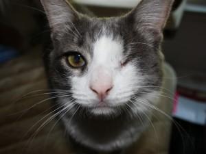 Postal: Gato con un ojo cerrado