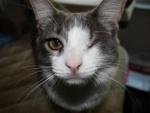 Gato con un ojo cerrado