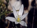Una bonita flor blanca