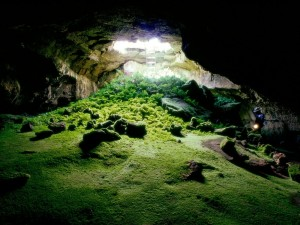 Plantas en el interior de una cueva