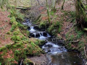 Riachuelo fluyendo por un bosque
