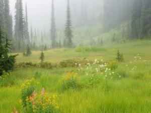 Niebla primaveral
