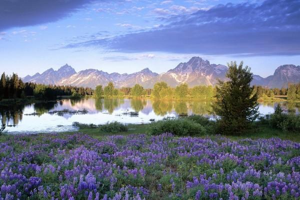 Flores de color lila junto a un lago