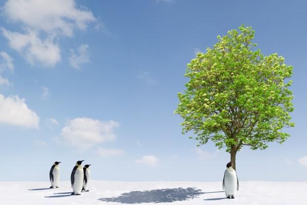 Pingüinos junto a un árbol verde