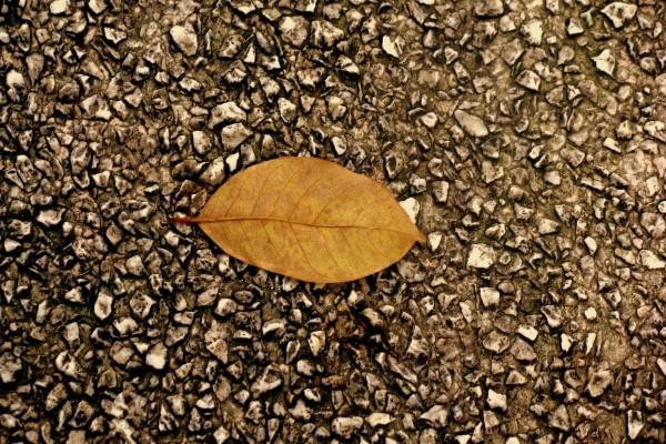 Hoja otoñal en el suelo