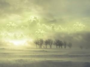 Árboles en un paisaje con viento y niebla