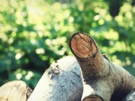 Ramas y troncos talados