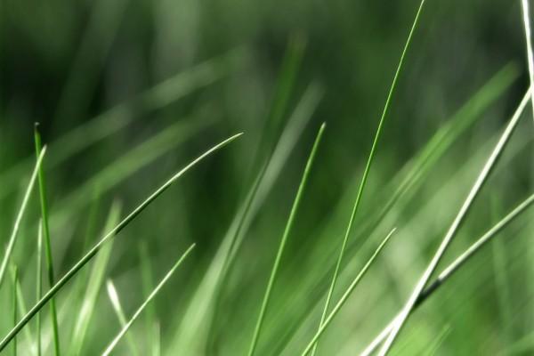 Briznas de hierba