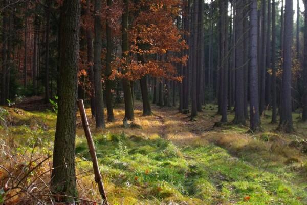 Árboles a la entrada de un bosque