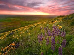 Un hermoso campo al amanecer