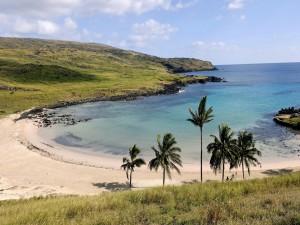 Postal: Palmeras en una pequeña playa