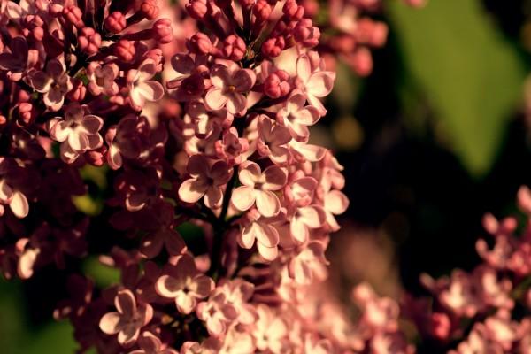 Bonitas y pequeñas flores