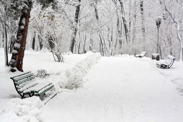 El camino de un parque cubierto de nieve