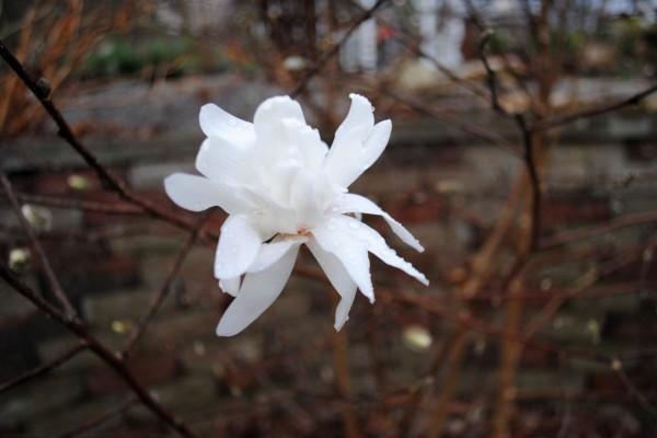 Hermosa flor blanca en la rama de un árbol desnudo
