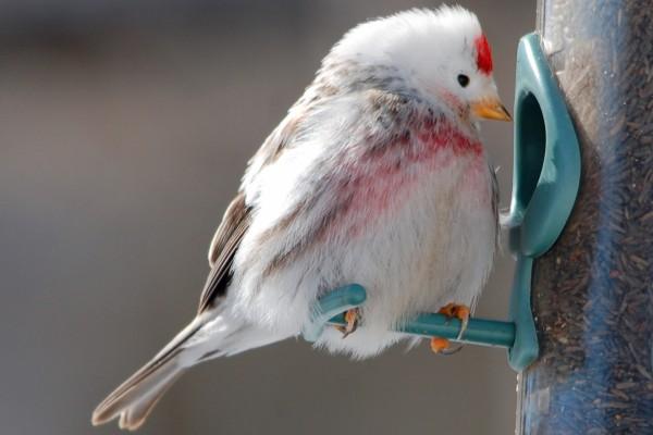Pájaro posado en un comedero