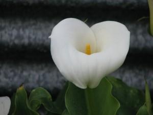 Una hermosa cala blanca