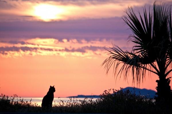 Un gato contemplando el amanecer