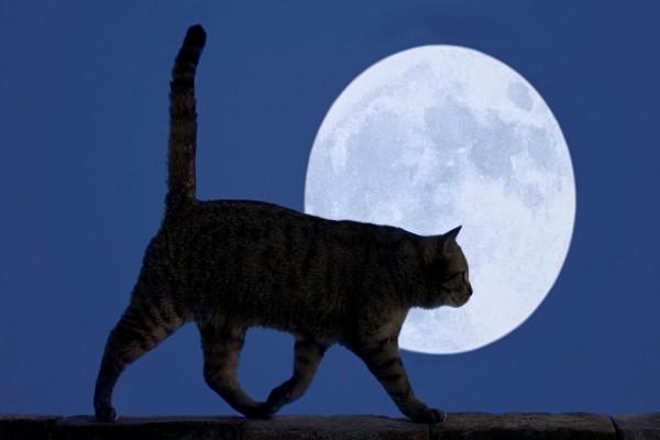 Un gato paseando a la luz de la luna