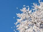 Flores blancas en un árbol