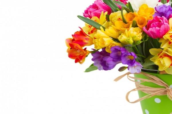 Narcisos, tulipanes y fresias en un recipiente para regalar