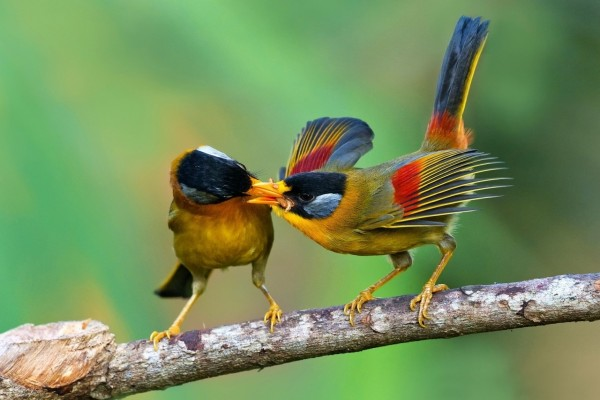 Aves compartiendo alimento