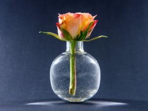Postal: Una bella rosa en un recipiente con agua