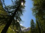 Los rayos del sol iluminan entre las ramas de un pino