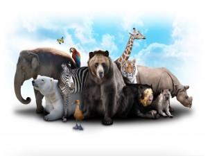 Postal: Animales amigos