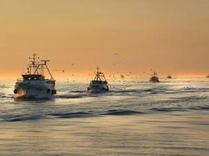 Postal: Barcos de pesca al amanecer