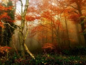 Postal: Niebla en un bosque en otoño
