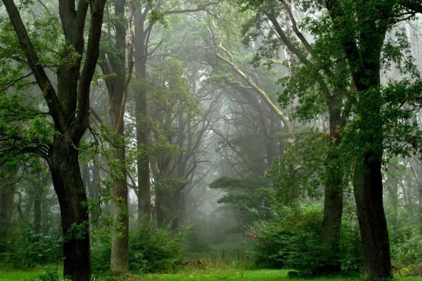 Niebla en un bosque verde