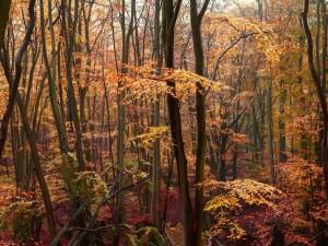 Postal: Hojas otoñales en los árboles de un bosque